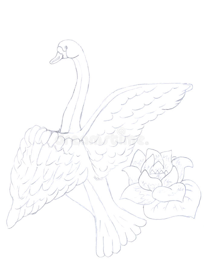 Bosquejo del cisne y de la flor stock de ilustración
