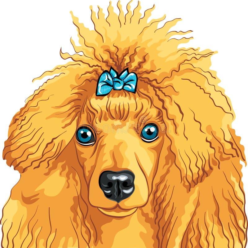 Bosquejo del color de la casta roja del caniche del perro ilustración del vector
