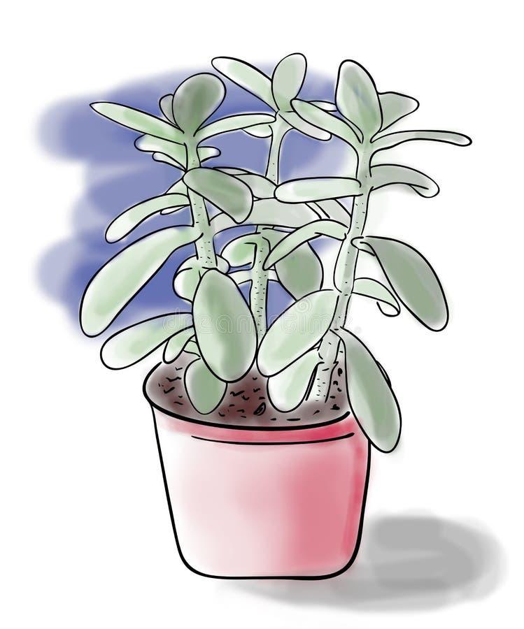 Bosquejo del color de la planta verde del Crassula en pote rojo en el fondo azul, dibujo pintado a mano del esquema stock de ilustración