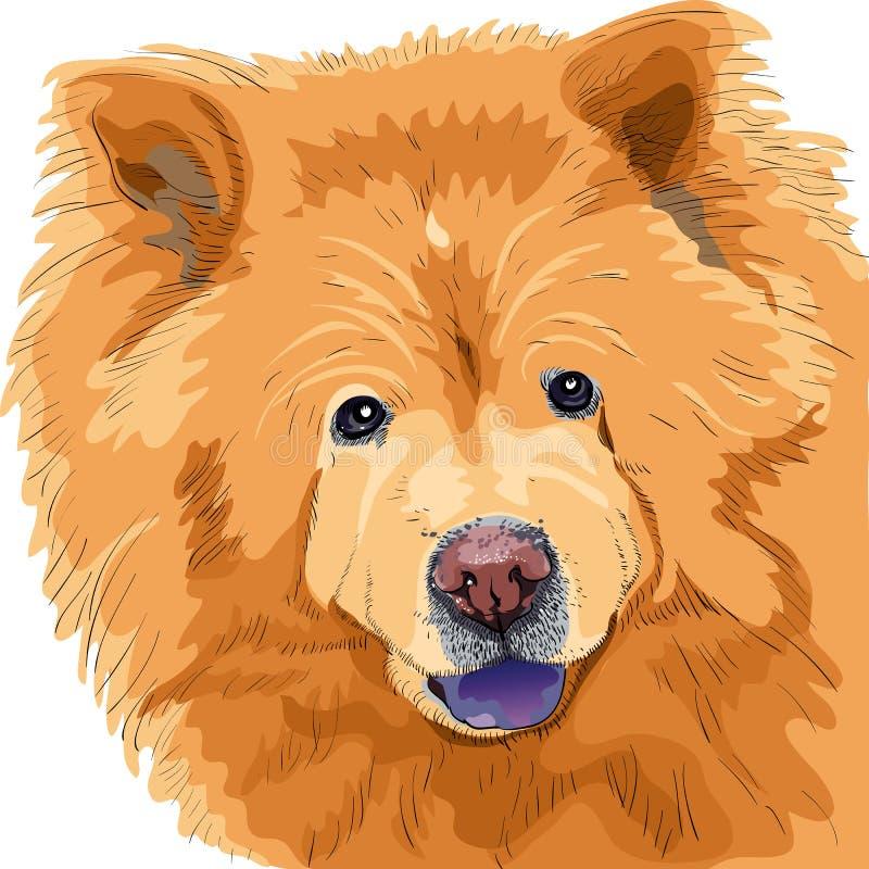 Bosquejo del color de una casta del chow-chow del perro ilustración del vector