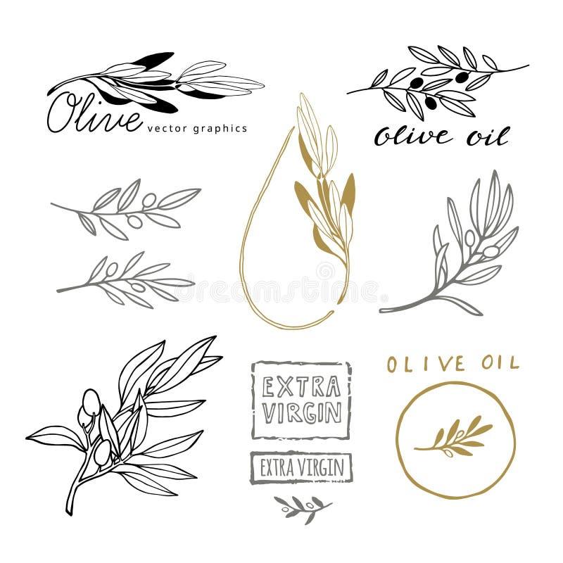 Bosquejo del dibujo de la mano de Olive Branches con las aceitunas Elementos del diseño para Olive Oil Packaging libre illustration