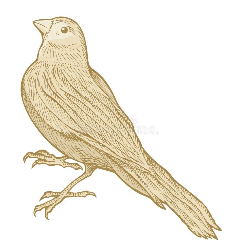 Bosquejo del pájaro stock de ilustración