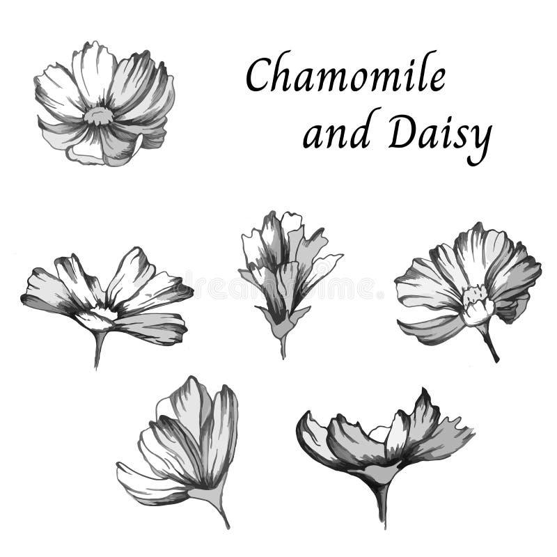 Bosquejo del vector Fije de las flores del contorno de margaritas en un fondo blanco Ejemplo blanco y negro del vector libre illustration