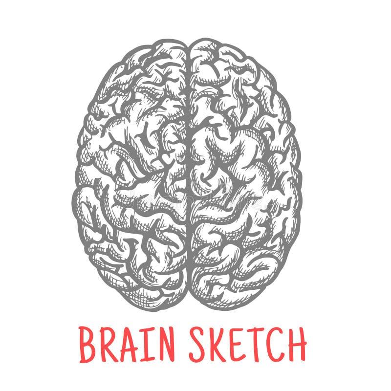 Bosquejo del vintage del cerebro humano para el diseño creativo libre illustration