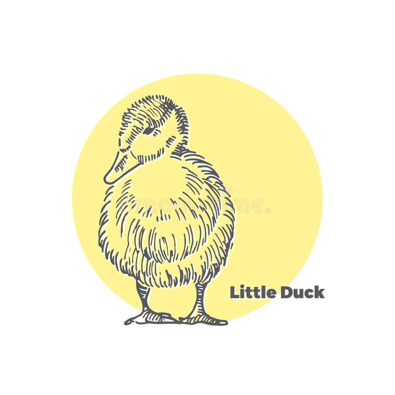 Bosquejo dibujado mano del vector del pequeño pato lindo con el fondo redondo amarillo ilustración del vector
