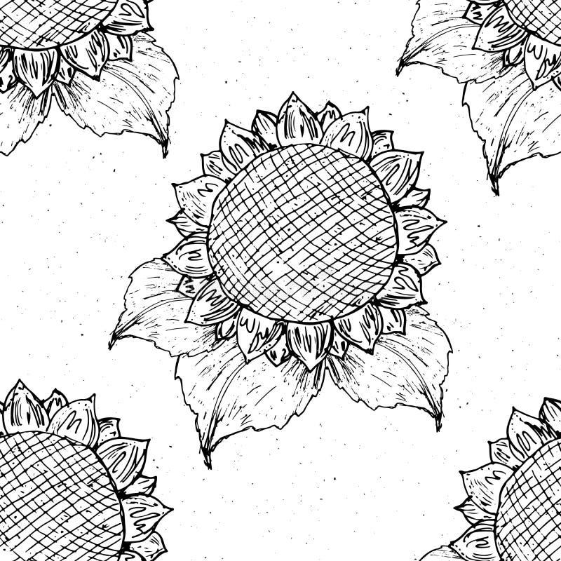 Bosquejo dibujado mano inconsútil del modelo del girasol, fondo, ejemplo del vector del diseño de la tipografía libre illustration