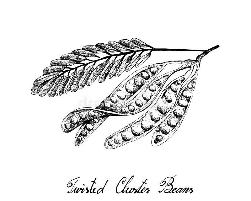 Bosquejo exhausto de la mano de las habas de racimo torcidas ilustración del vector