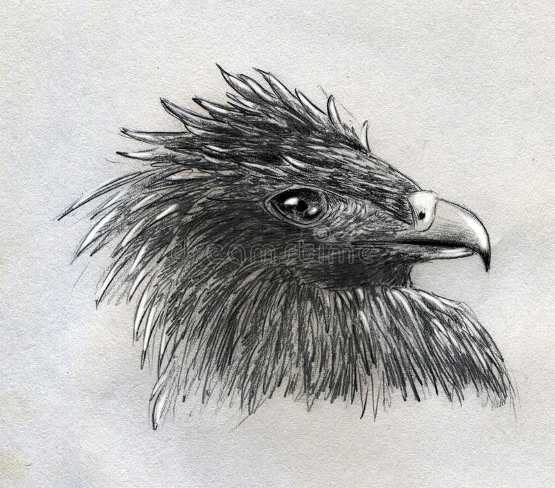 Bosquejo principal del águila stock de ilustración