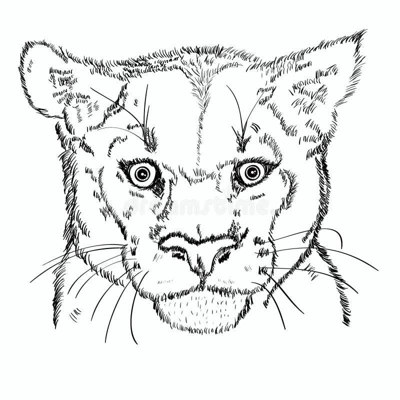Bosquejo principal del puma ilustración del vector