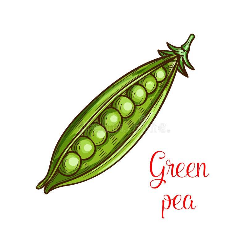 Bosquejo vegetal del guisante verde de la legumbre fresca stock de ilustración