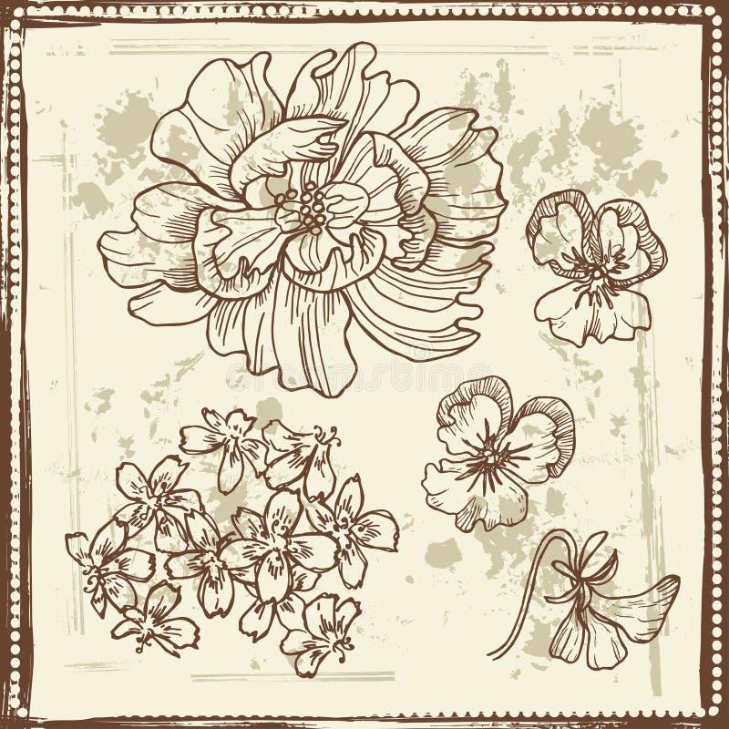 Bosquejos botánicos dibujados mano fijados stock de ilustración