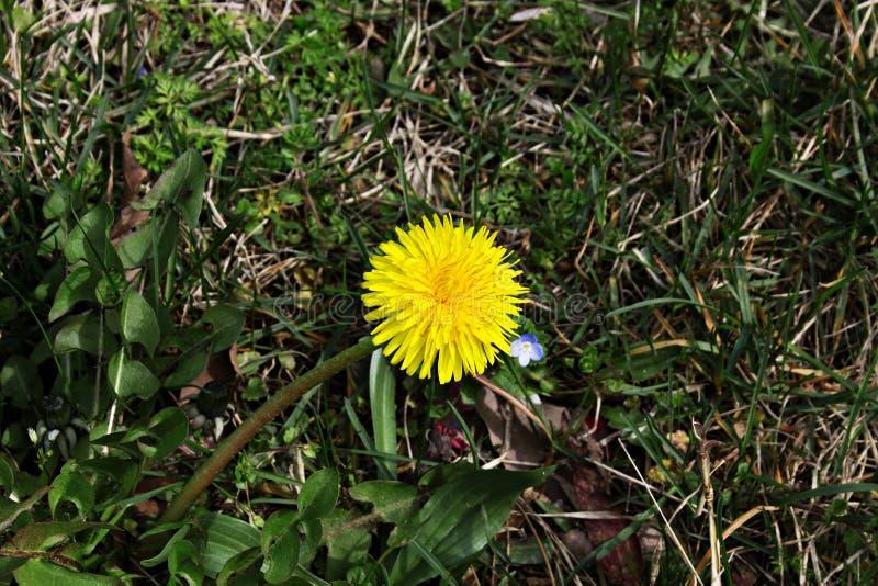 Bosquejos de la primavera fotografía de archivo