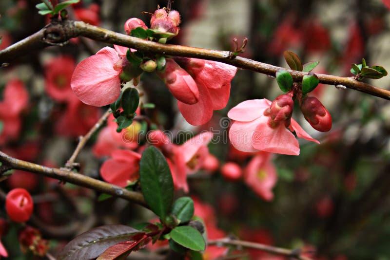 Bosquejos de la primavera fotografía de archivo libre de regalías