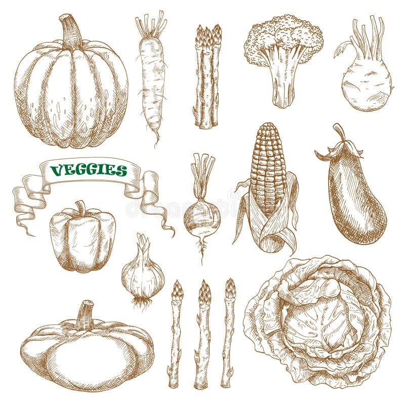 Bosquejos de las verduras del jardín y de la granja fijados libre illustration