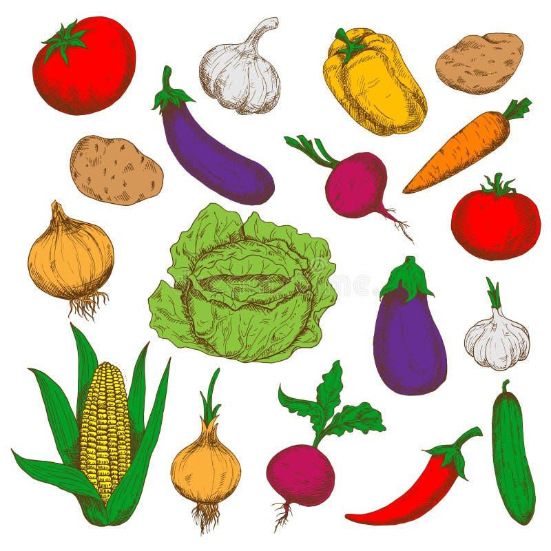 Bosquejos de las verduras frescas de la granja para cultivar diseño ilustración del vector