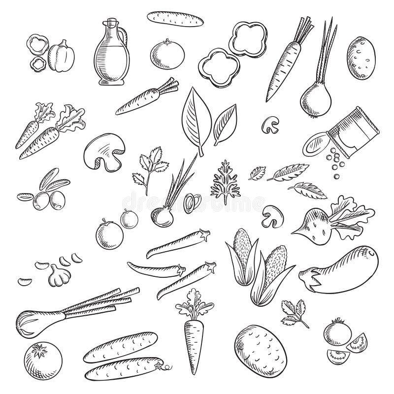Bosquejos de las verduras frescas y de las hierbas stock de ilustración