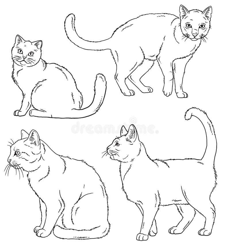 Bosquejos del esquema del vector de cuatro gatos en diversas actitudes stock de ilustración
