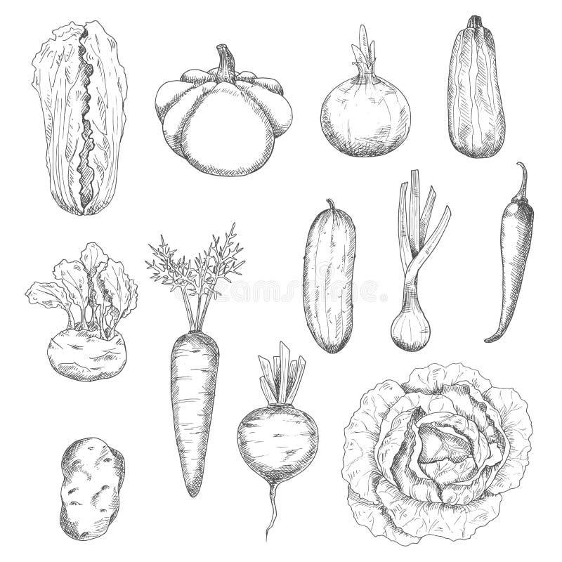 Bosquejos sanos recientemente desplumados de las verduras libre illustration