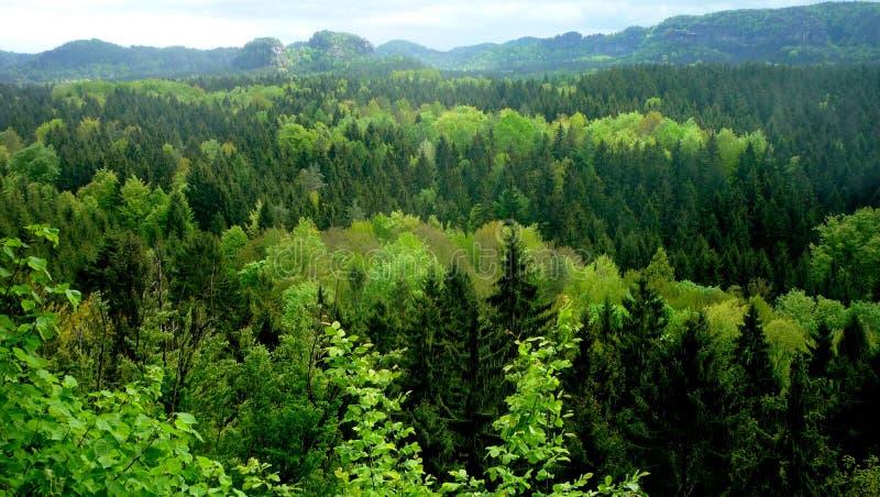 bosques imagenes de archivo