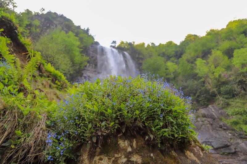 Bosques, cascadas y corrientes a relajarse imagenes de archivo