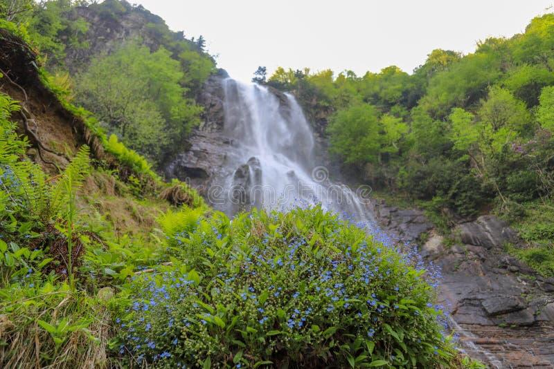 Bosques, cascadas y corrientes a relajarse fotos de archivo libres de regalías
