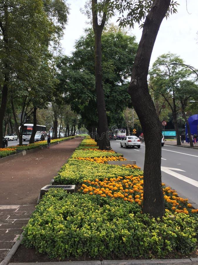 Bosques de Chapultepec Street στοκ εικόνα
