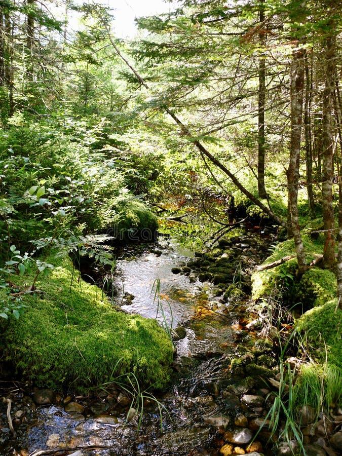 Bosques de Nova Scotia fotos de archivo