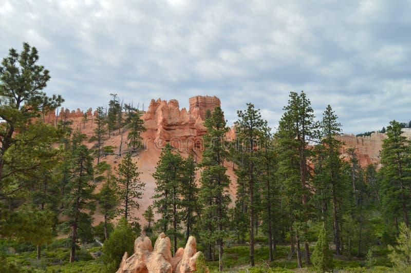 Bosques frondosos de pinos y de abetos en Bryce Canyon Formations Of Hodes geología fotografía de archivo libre de regalías