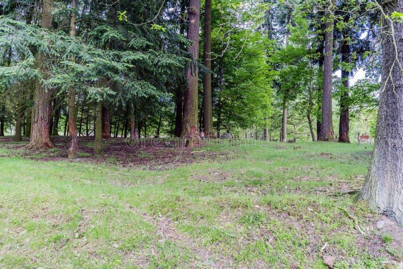 Bosques huting la tierra en el pueblo del mezirici de Velke imagenes de archivo