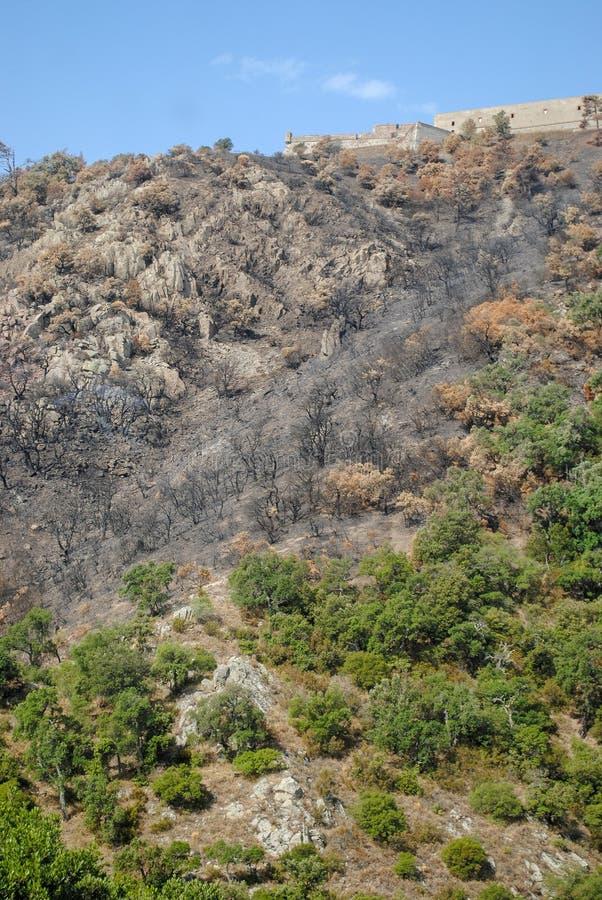 Bosques quemados en España fotografía de archivo