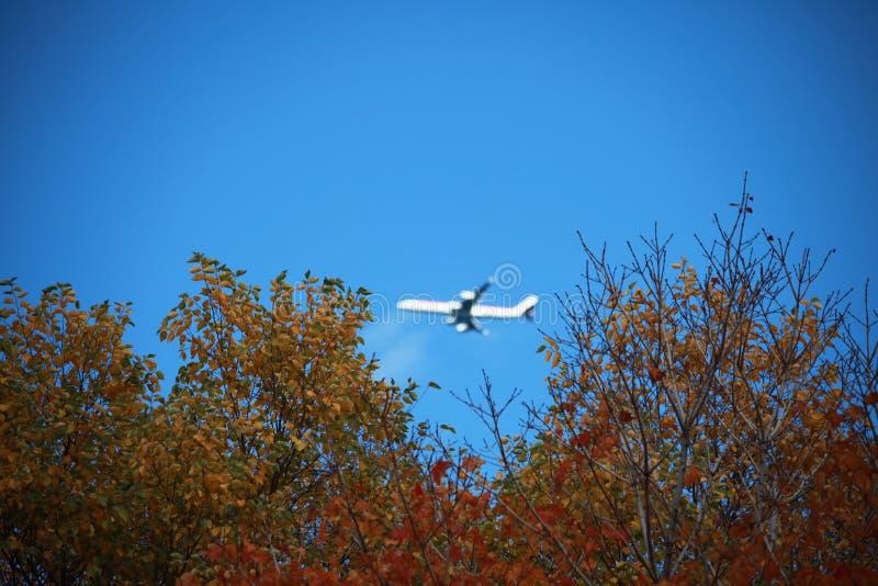 Bosques rojos y verdes, aeroplano fotografía de archivo libre de regalías