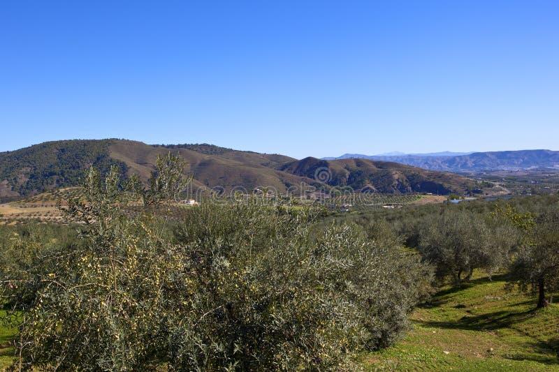 Download Bosques Verde-oliva E Montanhas Da Espanha Do Sul Imagem de Stock - Imagem de shrubs, foliage: 107528691