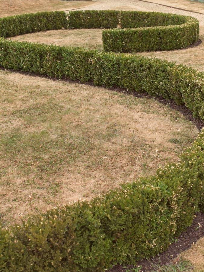 Bosquet en forme de s, image abstraite de jardin formel image libre de droits