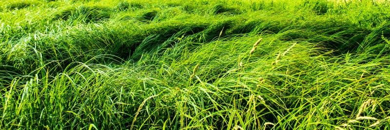 Bosquets d'herbe inégale photographie stock libre de droits