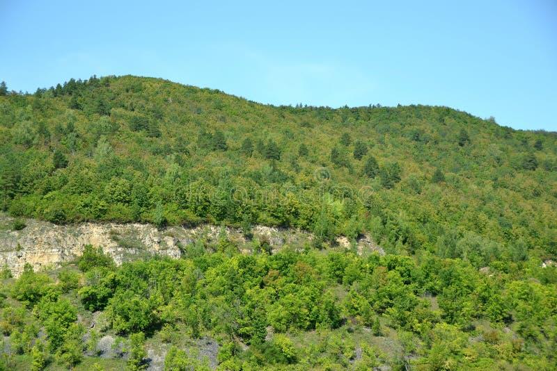 Bosquets denses des forêts à feuilles caduques sur les pentes rocheuses des montagnes antiques de Zhiguli image libre de droits