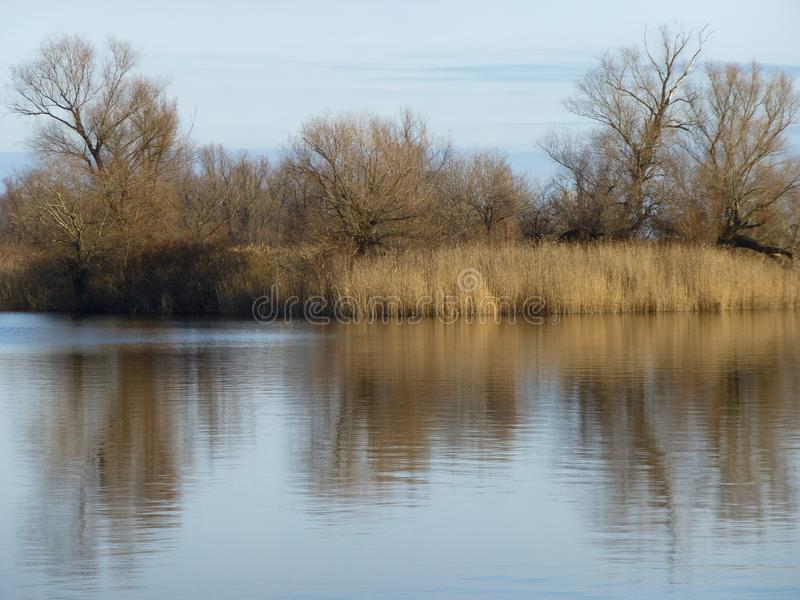 Bosquets des roseaux en rivière d'automne photo stock
