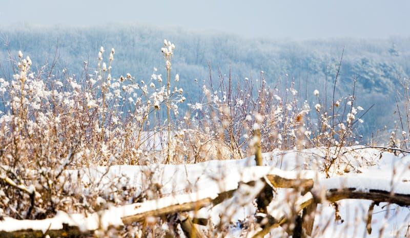 bosquets secs couverts de neige sur le fond du forest_ d'hiver photographie stock