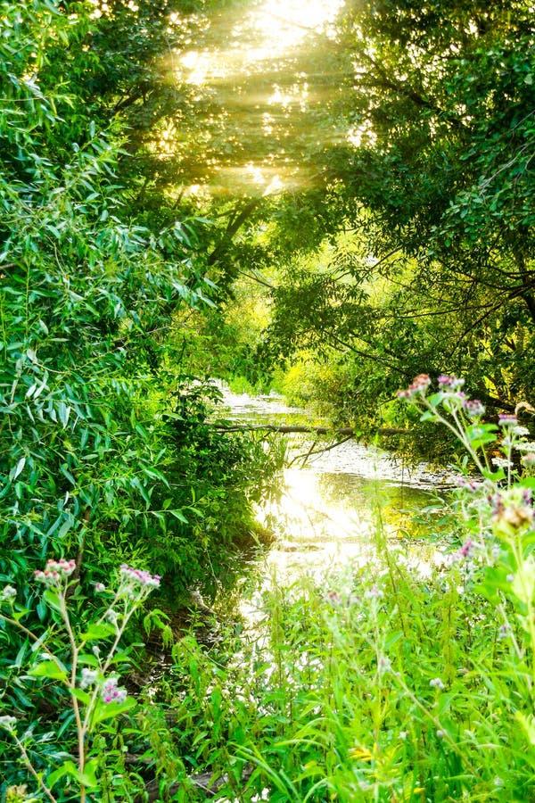 Bosrivier op een hete de zomerdag stock foto's
