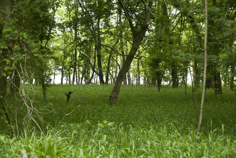 Bosrivierbos op James River royalty-vrije stock foto