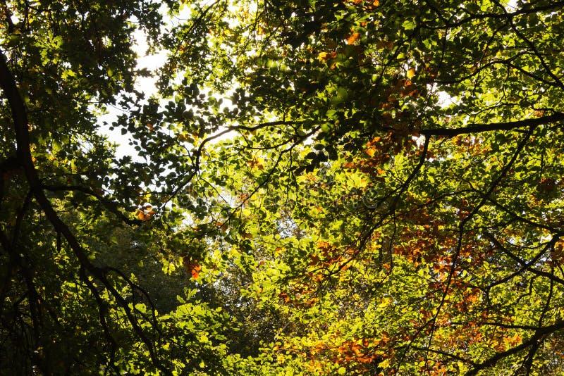 Bosscène bij het begin van de herfst royalty-vrije stock foto