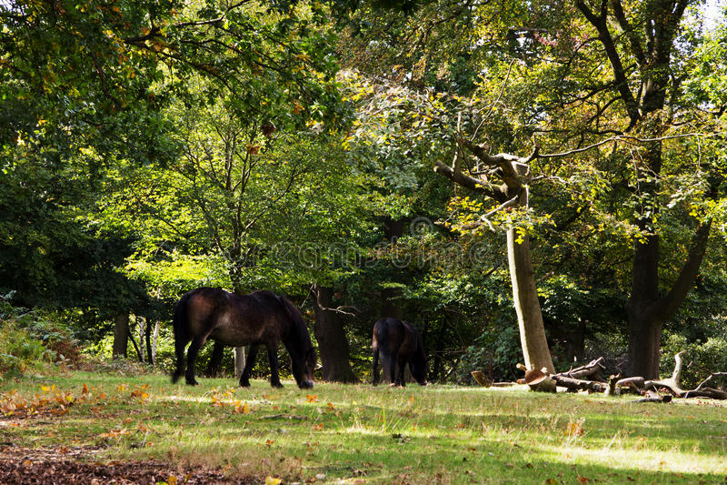 Bosscène bij het begin van de herfst stock foto's