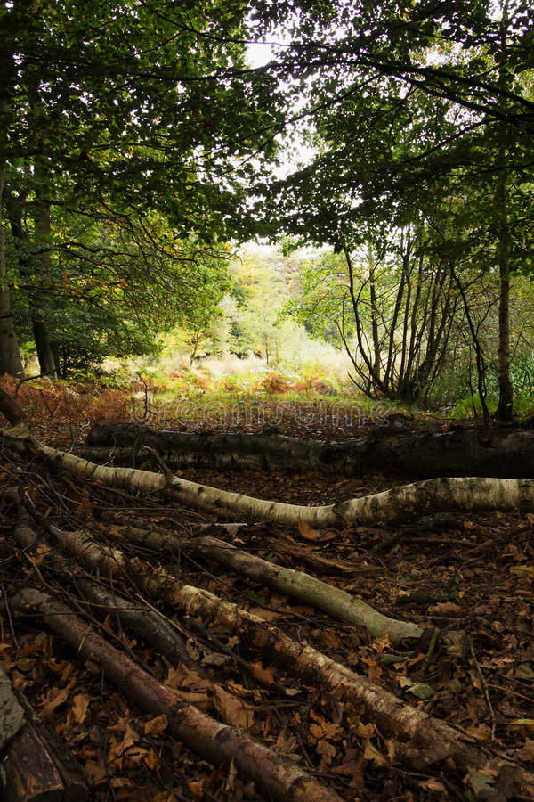 Bosscène bij het begin van de herfst stock afbeelding