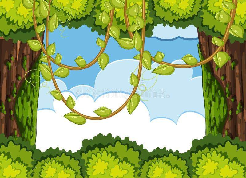 Bosscène met boom en wijnstok royalty-vrije illustratie