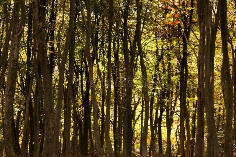Bosscène met gele en bruine de herfstbladeren stock foto's