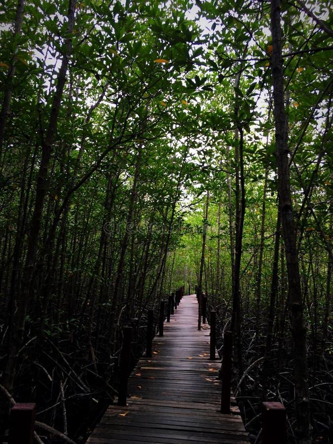 bossen stock afbeelding