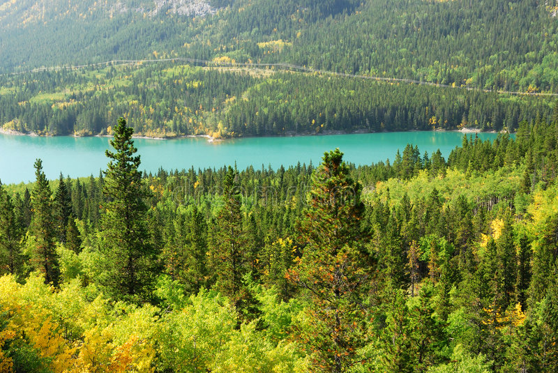 Bossen bij oever van het meer stock afbeeldingen
