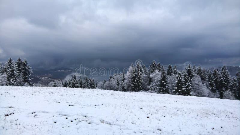 Bossen in de winter royalty-vrije stock afbeelding