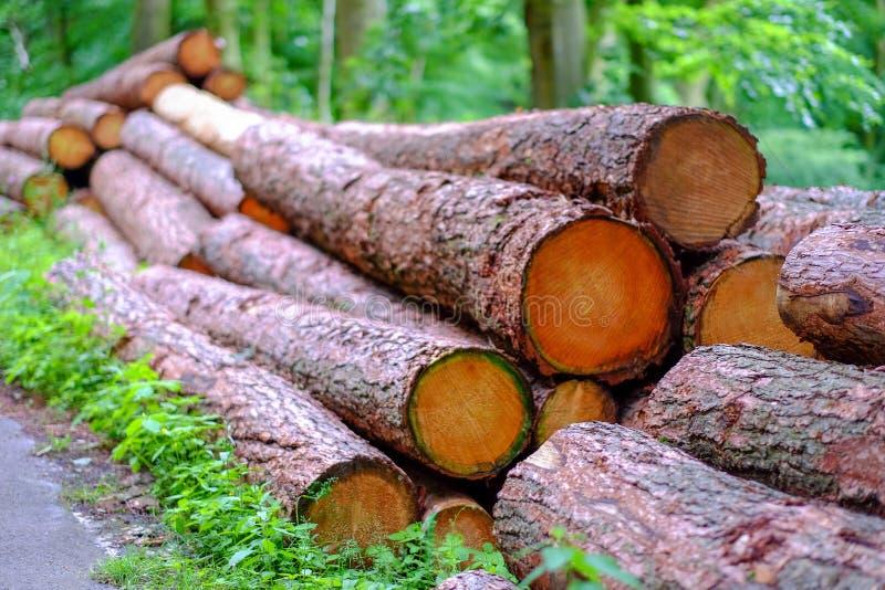 Bossen van gehakte boomboomstammen royalty-vrije stock fotografie