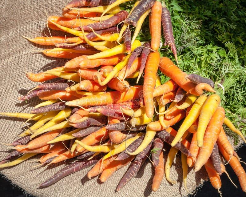 Bossen van Oranje, Gele en Purpere Wortelen die op Jute liggen stock afbeelding