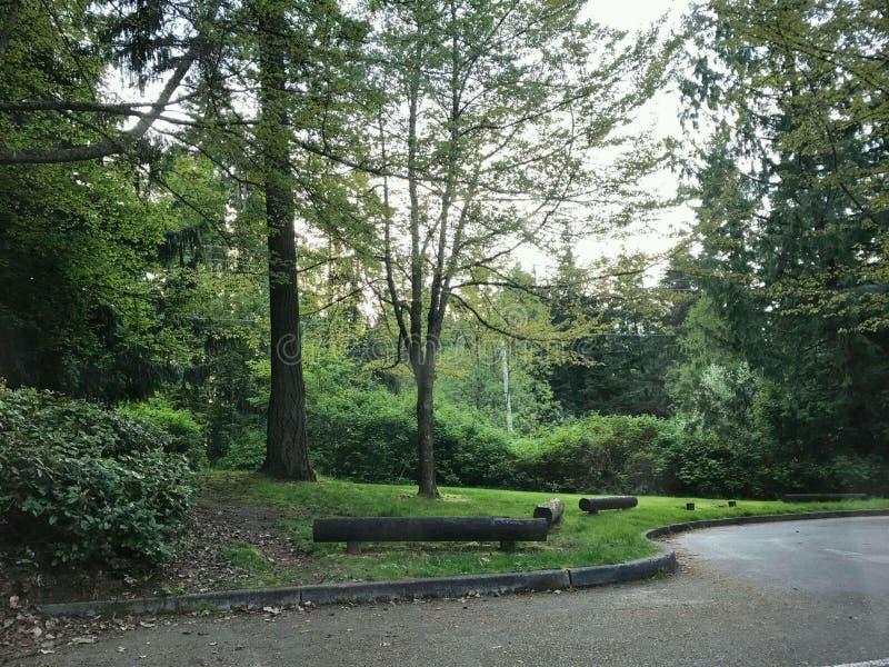 Bossen van Seattle Washington royalty-vrije stock afbeelding
